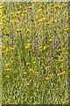 SE7090 : Wildflower Meadow, Ryedale Folk Museum, Hutton Le Hole, Yorkshire by Christine Matthews