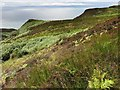 NR6006 : Moorland on the Mull of Kintyre by wrobison