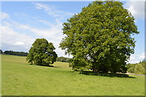 TQ5244 : Oaks, Penshurst Park by N Chadwick