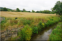 SP0228 : The River Isbourne at Winchcombe by Bill Boaden