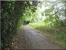 TL1614 : Path along the River Lea, Wheathampstead by David Howard