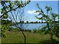 TF1807 : Deeping Lakes: lake with marginal woodland by Bob Harvey