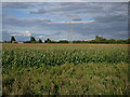 TL5264 : Field of maize by Hugh Venables