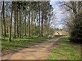 SP0513 : Monarch's and Macmillan Ways, Chedworth Woods by Derek Harper