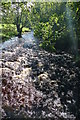 NY7706 : The River Eden near Nateby by Graham Hogg