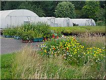NH3214 : Tree nursery at Trees for Life, Dundreggan by Julian Paren