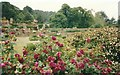 ST2428 : Exuberant  flowering by Bob Harvey