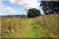 SJ2740 : Offa's Dyke Path by Jeff Buck
