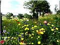 H5756 : Wildflowers, Culnaha by Kenneth  Allen