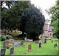 SO3700 : Churchyard trees, Llanbadoc by Jaggery