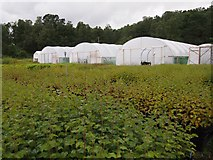 NH3214 : Polytunnels at Trees for Life by James Wood