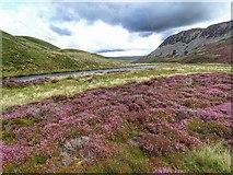 NY8328 : River Tees by Mick Garratt