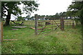 NY6004 : Gateway with modern gateposts on Pikestone Lane by Roger Templeman