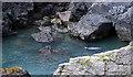 SM7123 : Seal at Pen Dal-Aderyn by Alan Hughes
