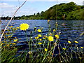 H5776 : Weeds, Loughmacrory Lough by Kenneth  Allen