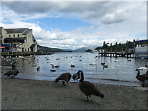 SD4096 : Lake Windermere Shoreline, Bowness-on-Windermere by Anthony Foster