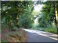 SX8979 : Closed roadway near Ashcombe by David Smith