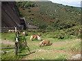 SX5691 : Dartmoor Ponies by Michael Graham