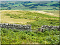 NY8687 : Wall on Corsenside Common by Trevor Littlewood