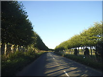 TQ6668 : Sole Street going through the orchard by David Howard
