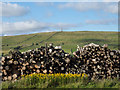 NY7346 : Timber stack on north side of A689 by Trevor Littlewood
