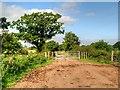 SJ4673 : Dunham-on-The-Hill, Gate on Rake Lane by David Dixon