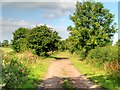 SJ4673 : Rake Lane (Track) near to Dunham-on-The-Hill by David Dixon