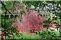 SE2812 : Poppies:Wave glimpsed through the trees by Graham Hogg