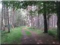 NH8197 : Path into Balblair Wood by M J Richardson