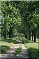 SP2140 : Track and avenue of trees by Philip Halling