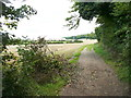 TL1627 : Lane to the south at Temple End by Humphrey Bolton