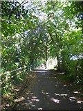 SX9777 : Cycle track between Dawlish and Dawlish Warren by David Smith