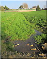 SP1014 : River Leach above Northleach by Derek Harper
