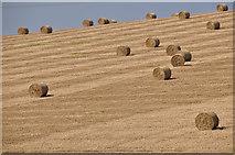 ST0107 : Cullompton : Grassy Field by Lewis Clarke