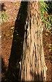 SX8963 : Log, Cockington valley by Derek Harper