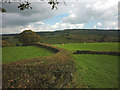 SD4692 : Wide hedge on Blakehowe Hill, Underbarrow by Karl and Ali