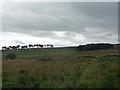 NZ0493 : Grassland near Fontburn Reservoir (5) by Stephen Richards