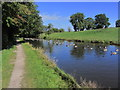 SJ9170 : Canada Geese on the Macclesfield Canal, N of Oakgrove by Colin Park