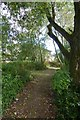 SE6150 : Path between James College and the Lake by DS Pugh