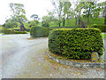 V9848 : Hedges in the car park of Bantry House by Oliver Dixon
