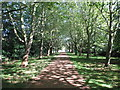 TQ0785 : Avenue of trees from Swakeleys main gate by David Hawgood