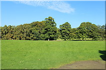 NS6859 : Bothwell Castle Grounds by Billy McCrorie