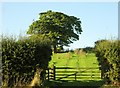 SE6484 : Gate  to  fields  on  the  Brecks by Martin Dawes