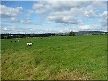 NY5027 : Sheep pasture between Tirril and Yanwath by Christine Johnstone