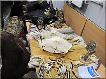 TQ3380 : Endangered animal fur and bone, Custom House by David Hawgood