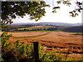 NJ6203 : A cornfield south of West Learney by Stanley Howe