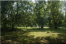 TQ2780 : View of grass and trees in Hyde Park from the path next to N Carriage Drive #4 by Robert Lamb