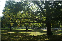 TQ2780 : View of grass and trees in Hyde Park from the path next to N Carriage Drive #5 by Robert Lamb
