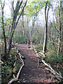 SP9314 : A path between the trees in Elder Wood at College Lake by Chris Reynolds