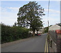 SO2508 : Dominant tree, Llanover Road,  Blaenavon by Jaggery